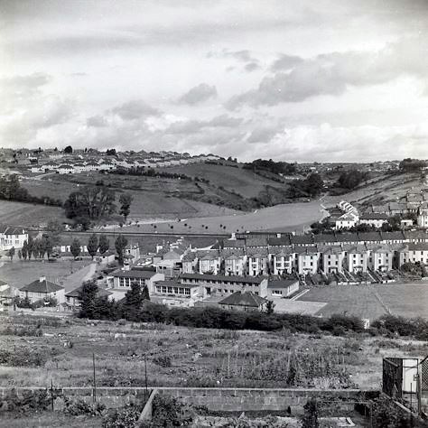 View of Tulgey Woods from 1957